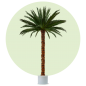 Mobile Preview: Palm Areca 4,0m