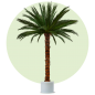 Mobile Preview: Palm Areca 3,5m