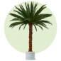 Mobile Preview: Palme Areca 3,0m